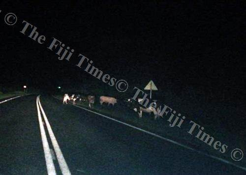 Stray animals on our roads. Picture: FT FILE