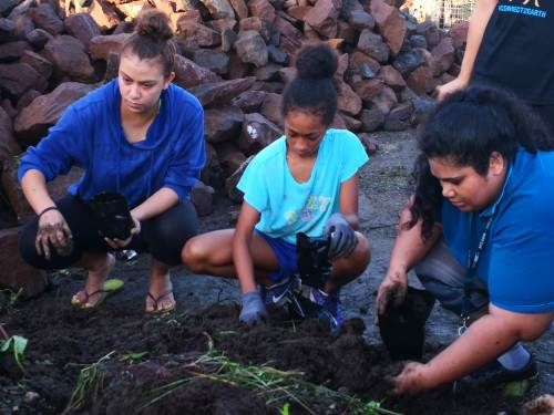 Volunteers pot mangrove seedlings for replanting in the Lami foreshore. Picture: LICE MOVONO