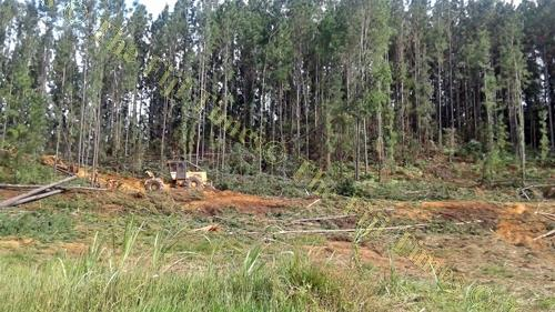 Logging operations in the North are currently on hold because of rainy weather. Picture: SERAFINA SILAITOGA