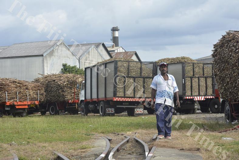 Rakiraki truck driver Muni Chand waits patiently for the Lautoka Sugar Mill to start crushing yesterday. Picture: REINAL CHAND