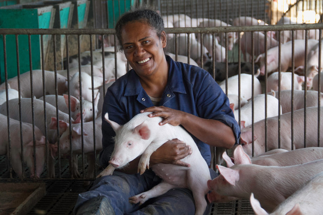 Pork sales up in Fiji as domestic demand increases