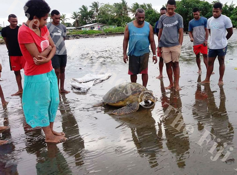 Youths of Kinoya village ready to set Green Turtle free. Picture: SUPPLIED.