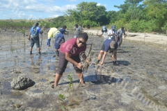Salote Tikicidre joins the ATS Pacific – Allied Tour Services colleagues plant mangroves at Saweni Beach in Lautoka. Picture: REINAL CHAND