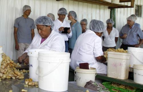 The ACIAR team visited Kaiming Agro Processing factory in Navua. Picture: ATU RASEA