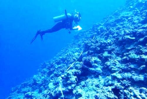 Vatuvara Foundation and WCS researchers carry out their survey in Northern Lau waters. Picture: SUPPLIED