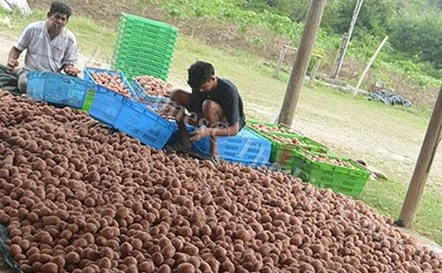 The Ministry of Agriculture is working with farmers to strengthen potato farming in Fiji. Picture: SUPPLIED