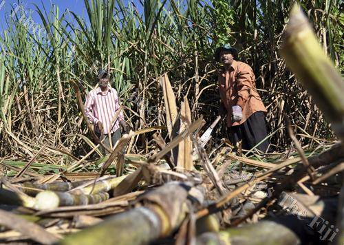 A Lautoka sugarcane grower says more training was needed if farmers were to improve husbandry skills. Picture: FT FILE