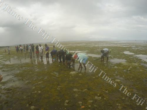 The turaga na Rokobaleni, Joape Tukitoga, (closest to camera with pink hat) plants mangrove along his traditional fishing ground. Picture: SUPPLIED
